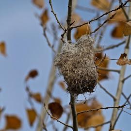Humming bird nest by Irina Walker - Nature Up Close Hives & Nests
