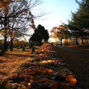 An Autumn Walk by Nick Massar - City,  Street & Park  Vistas ( autumn, fall, nickolasmassar, leaves )