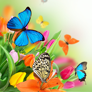 Butterfly Live Wallpaper For PC / Windows 7/8/10 / Mac – Free Download