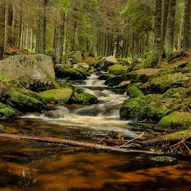 Hamer Bach  by Michal Valenta - Landscapes Forests