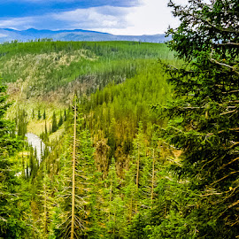 Yellowstone by Jennifer  Loper  - Landscapes Mountains & Hills ( mountains, forest, pine trees, river, clouds )
