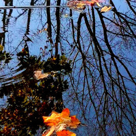 leaf in Water by Vijay Govender - Instagram & Mobile Other