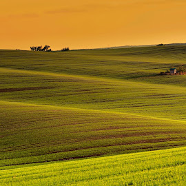 landscape in waves by Josef Hasík - Landscapes Prairies, Meadows & Fields ( sunset, green, waves, brown, yellow )