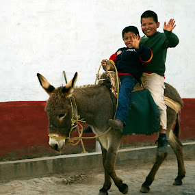 Kids and donkey  by Cristobal Garciaferro Rubio - People Street & Candids ( donkey, boys, travel, smile, boy )