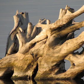 Stump by Lyn Simuns - Nature Up Close Other Natural Objects ( light, earthtones, stump, evening, lake )
