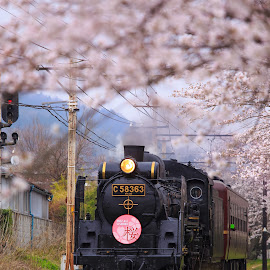 Tunnel of spring by Nurul Anwar - Transportation Trains