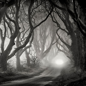 The Dark Hedges by Gary McParland - Landscapes Forests