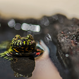 I See You by Loren Holloway - Animals Reptiles