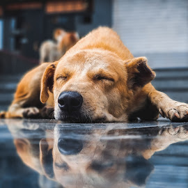 I'm not sleeping , i'm meditating by Mitul Gajera - Animals - Dogs Portraits ( #puppy #dog #sleeping #peace #peaceful #awesome #serenity #photography #light #life #happy #photooftheday #doglove )