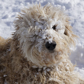Snowmurphy by Dyan Brisson - Animals - Dogs Playing