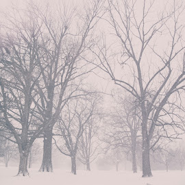 Old Man Winter by Caleb Daugherty - Landscapes Weather