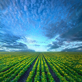 Forever Cabbage by Phil Koch - Landscapes Prairies, Meadows & Fields ( vertical, farmland, travel, yellow, leaves, love, sky, nature, tree, weather, perspective, flowers, light, orange, twilight, art, agriculture, journey, horizon, portrait, environment, dawn, season, cabbage, serene, trees, lines, natural, hope, inspirational, wisconsin, ray, joy, country living, beauty, landscape, phil koch, spring, sun, photography, farm, country life, horizons, inspired, clouds, office, park, heaven, green, beautiful, scenic, morning, shadows, field, red, blue, sunset, amber, peace, meadow, summer, crops, beam, earth, sunrise, garden )