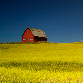 Barn at Sunset by Gabriel Gutierrez - Landscapes Prairies, Meadows & Fields ( field, red, barn, yellow, rural )