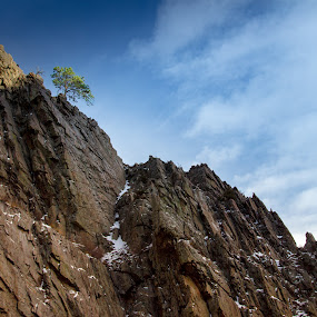 Pine on the Summit by John Shelton - Landscapes Mountains & Hills ( mountains, lone tree, tree, colorado, landscape, rocks, big thompson canyon,  )