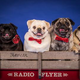 by Myra Brizendine Wilson - Animals - Dogs Portraits ( canine, animals, pet, dog,  )