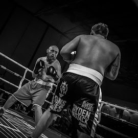 Death Stare by Mark Shayler - Sports & Fitness Boxing ( punch, fight, boxer, fighting, boxing, ringside, fighter )