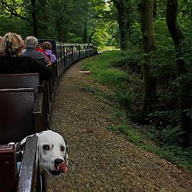 Billy's train ride by Wilson Beckett - Transportation Trains