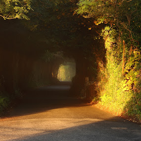 Golden Avenue by Michael Croghan - Landscapes Sunsets & Sunrises ( pwcpaths )