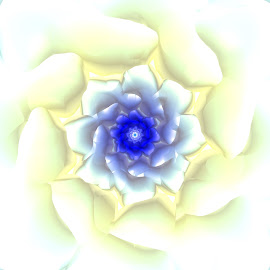 White flower by Cassy 67 - Illustration Abstract & Patterns ( love, abstract, abstract art, digital art, lovely, harmony, flowers, fractal, light, digital, fractals, flower )