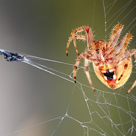 Stuff of Nightmares by Shawn Thomas - Animals Insects & Spiders