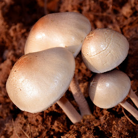 wildy by SANGEETA MENA  - Nature Up Close Mushrooms & Fungi