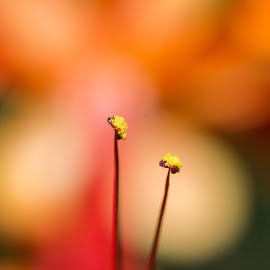 The seeds by Prajwal Ullal - Nature Up Close Gardens & Produce ( canon, macro, nature, raynox, pollens )
