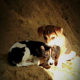 by Soumyadip Ghosh - Animals - Dogs Puppies