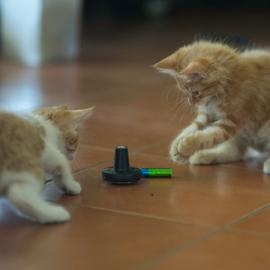 Rechargable ? by Annette Flottwell - Animals - Cats Kittens ( marmelade, ginger, gatitos, kttens )
