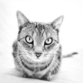 Any Problem? by Martin Dvořák - Animals - Cats Portraits
