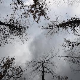 Време by Georgi Kolev - Black & White Landscapes ( мрачен., ден., есенен., време., дървета. )