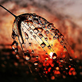 Sharing Beauty by Marija Jilek - Nature Up Close Natural Waterdrops