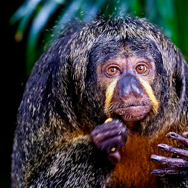 Im Eating by Ken Nicol - Animals Other Mammals (  )