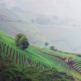 Terasering Argapura by Ahmad Barokah - Landscapes Mountains & Hills ( #landscapes, #pesonaindonesia, #wonderfulindonesia, #indonesia, #argapura )