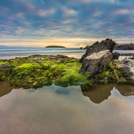 Moss Garden  by Nicole Rix - Landscapes Waterscapes ( clouds, water, sand, reflection, sunset, moss, seascape, rocks )