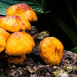 Mushrooms by Dave Lipchen - Nature Up Close Mushrooms & Fungi ( mushrooms )