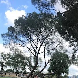 Tree at an angle by Linda Kocian - City,  Street & Park  City Parks (  )