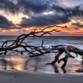Break of Day by Harry James - Landscapes Beaches ( coastal georgia, golden isles, driftwood beach, sunrise, jekyll island, beach )