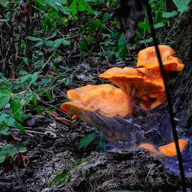 by Arie Shively - Nature Up Close Mushrooms & Fungi