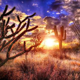 Carefree by DE Grabenstein - Landscapes Sunsets & Sunrises