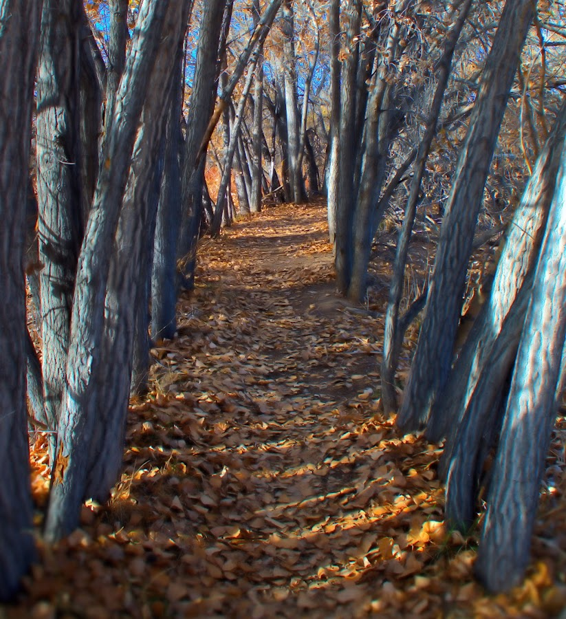 path less traveled by Jim Knoch - Nature Up Close Trees & Bushes ( fall leaves on ground, fall leaves )