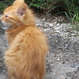 Коте by Georgi Kolev - Animals - Cats Kittens ( храсти., път., коте., ден., светлина. )