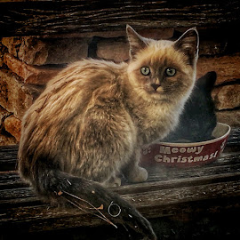 Strays by Martin Dunaway - Animals - Cats Kittens ( blue eyes, stray kitten, cute, small, portrait )