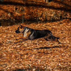 by Flaviu Negru - Animals - Dogs Running