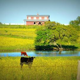 On the Farm by Rhonda Kay - Landscapes Prairies, Meadows & Fields