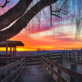 Farm Fence by Ed & Cindy Esposito - Landscapes Sunsets & Sunrises ( farm, barn, lamcaster, pa, sunrise )