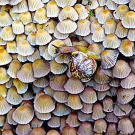 Small Mushrooms by Mārīte Ramša - Nature Up Close Mushrooms & Fungi (  )
