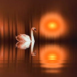 Swanny River by Leslie Collins - Digital Art Places ( water, digital art, trees, reflections, swan, place, sun, river )