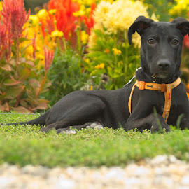 in the park by Ditte Foto - Animals - Dogs Portraits ( black dog, park, dog portrait, flowers, dog )