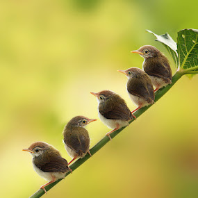 We are waiting mom by Prachit Punyapor - Animals Birds