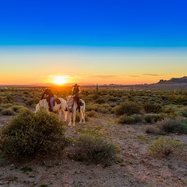 Two Horse Sunset by Ralph Resch - Animals Horses ( sunset, horse, people )